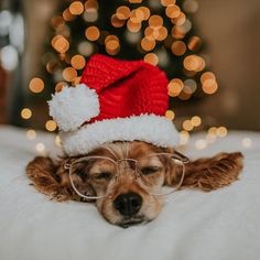 """Santa Paws reporting for duty. Dog Selfie, Smiling Dogs, Dog Hacks, Dog Tattoos, White Dogs, Dog Show, Boxer Dogs, Dog Photography, Dog Accessories"