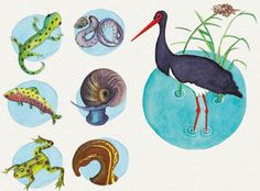 Hol élnek a gólyák, és mit esznek? Teaching Kids, Rooster, Animals, Spring, Projects, Animales, Animaux, Animal, Animais