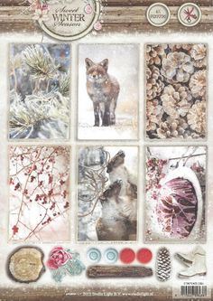 Stansvel Sweet winter | Fox