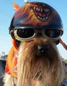 HARLEY THE BIKER DOG | Flickr - Photo Sharing!