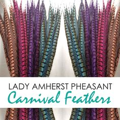 We Cater to Carnival Buyers Pheasant Feathers, Carnival, Nyc, Lady, Shop, New York City, Store