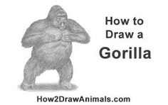 how to draw a gorilla for beginners
