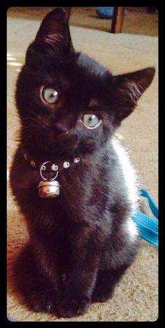 Black cat, baby cat