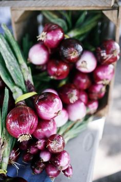 Bunches of red onions @ the Manteo, North Carolina Farmers' Market | Gardenista