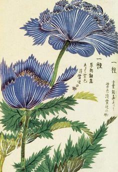fr.wiki.org ֎ iwasaki tsunemasa illustration florale fleur bleue botanic japon japan estamp print