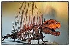 Dimetrodon from the Hall of Paleontology, Houston Museum of Natural Science | Flickr - Photo Sharing!)
