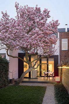 Terrace Garden, Garden Trees, Home Garden Design, Small Garden Design, Little Gardens, Outside Living, Garden Care, Dream Garden, Backyard Landscaping