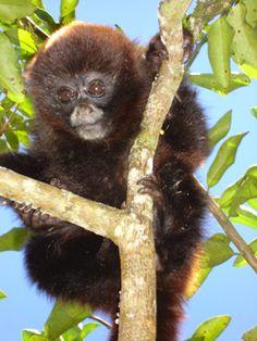 17 cutest animals of Peru - Peru Sabe