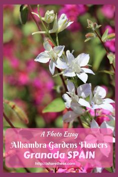 Flowers of Alhambra Gardens Granada- a Photo Essay - i Share #flowers #Alhambra #Granada #Spain #gardens