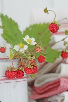 Strawberry Patch...U Pick 'Em...VIBEKE DESIGN