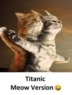 This is too funny !: Kitty Cats Flying Cats And Kittens Humor Kitty Kitty Titanic Cats Funny Kitties Titanic Kittens Animal Baby Animals, Funny Animals, Cute Animals, Funny Horses, Animal Fun, Cute Kittens, Cats And Kittens, Funny Kitties, Kitty Cats