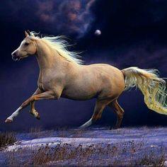 ...caballo