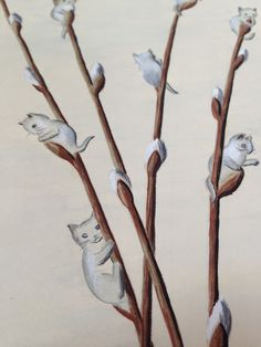Pussy willow illustration by unknown artist, held at the Pringle Herbarium.