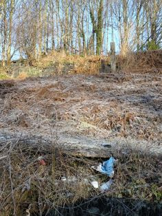 Plastic litter lasts forever