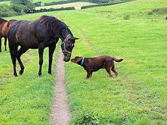 Bear in deep conversation with a horse. 8 months old