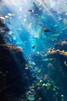The World Under the Water Under The Water, Fauna Marina, Wale, Underwater Life, Underwater Photos, Underwater Wallpaper, Underwater Caves, Deep Blue Sea, Beautiful Ocean