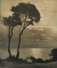 dame-de-pique: John Kauffmann (1864-1942) Untitled (Trees on the Coast), n.d.