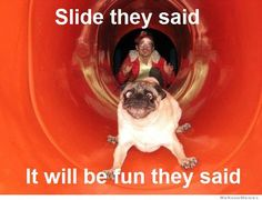pug + slide = ridiculous  I don't know what's funnier, the dog or the guy in the back