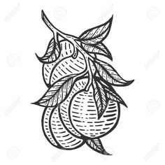 Fruit Sketch, Branch Vector, Peach Fruit, Fruit Plants, Tree Branches, Trees To Plant, Graphic Art, How To Draw Hands, Royalty Free Stock Photos