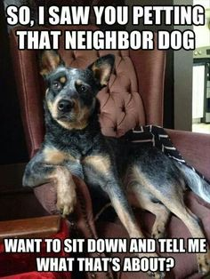 """Ruh roh....I am ALWAYS in trouble for """"cheating"""" on my pups. I feel I have to pet every dog, cat, critter I meet and the look I get when returning home is exactly THIS!"""