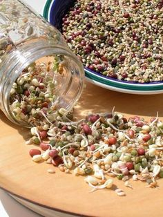 Sprouting For Your Birds: They are a live and nutritious food for companion birds. Sprouts are one of the best foods you can feed your birds.