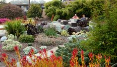Image result for drought tolerant plants for sacramento area