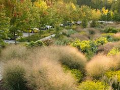 Bioswale at Cornell Plantations, Ithaca NY / Wolf Landscape Architecture / Photo by Chris Kitchen