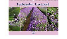 Farbzauber Lavendel (Wandkalender 2021 DIN A2 quer) Vineyard, Outdoor, Wall Calendars, Lavender, Deutsch, Colors, Outdoors, Vine Yard, Vineyard Vines