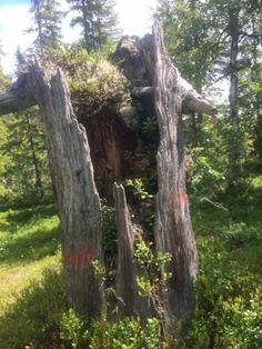 Mulebu: Lårdalstigen Trunks, Plants, Drift Wood, Flora, Plant