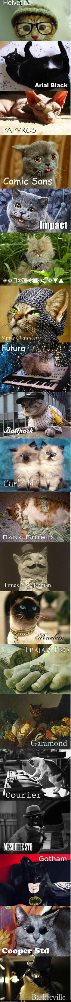 I don't even like cats. but this is hilar.