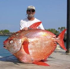 One of the tastiest fish that swims the ocean. The Opah!