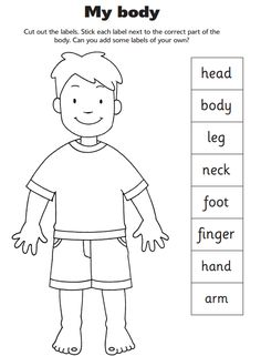 Body Parts Worksheets And Early Years Teaching On Preschool Worksheets, Preschool Learning, In Kindergarten, Preschool Activities, Science Classroom, Listening Activities, Classroom Themes, Body Parts Preschool, Early Years Teaching