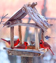 What do bluebirds eat in winter? What seed can I serve to finches and cardinals that sparrows won't eat? Our bird experts answer your questions. Wood Bird Feeder, Bird Feeder Craft, Bird House Feeder, Garden Bird Feeders, Garden Totems, Glass Garden, Homemade Bird Houses, Homemade Bird Feeders, Bird Houses Diy
