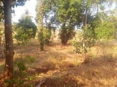 6.22 Acre Land with 2000 sq ft House for sale in Ottappalam, Palakkad