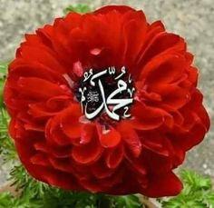 Allah Wallpaper, Islamic Wallpaper, Islamic Images, Islamic Love Quotes, Cute Good Morning Images, Baby Girl Images, Islamic Posters, Muhammad, Muhammed Sav