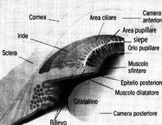 COLLARETTO IRIDE - Cerca con Google