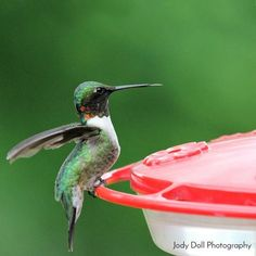 5 Easy Ways to Attract Hummingbirds to Your Yard