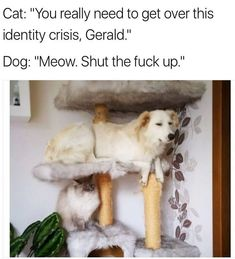 Funny Dog Pictures Dump of the Day - 2