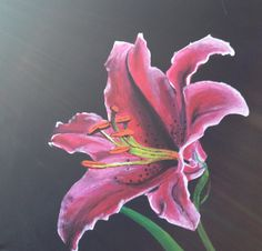 Lily painting Pencil Art, Pencil Drawings, Lily Painting, Tattoo Drawings, Tattoos, Coloured Pencils, Oil Pastels, Paint Designs, Lilies