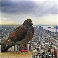 En la cima del Empire State Building - Summit by Pilar Azaña, via Flickr