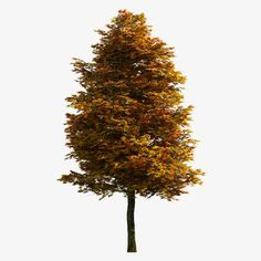 Tree PNG and Clipart