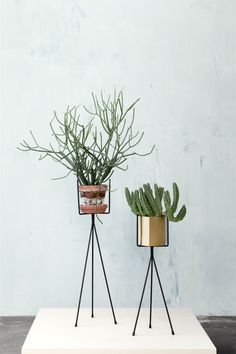 plant holders and brass hexagon pot by fermliving // new collection for SS14