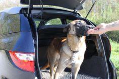 Im Kofferraum des Aixam Coupé GTI ist genug Platz für deinen treuen Vierbeiner. #aixam #fahrenab15jahren Vehicles, Autos, Black Interior Doors, Track Roller, Rear Window, Interior Trim, Vehicle, Tools