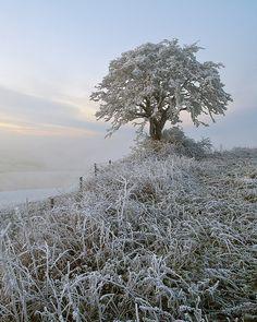 Hilltop Hoar Frost