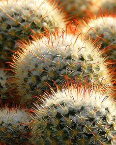 http://www.pinterest.com/pdjacquez/my-desert-garden-cactus/