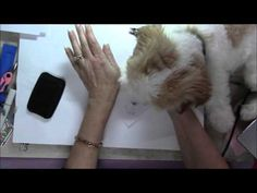 Stamping with Cooper - YouTube