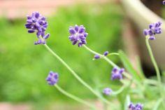 ruru*さんが投稿した画像です。他のruru*さんの画像も見てませんか?|おすすめの観葉植物や花の名前、ガーデニング雑貨が見つかる!GreenSnap(グリーンスナップ)