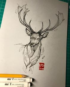 Psdelux is a pencil sketch artist based in Tatabánya, Hungary. He usually draws animal sketches. Psdelux also makes digital drawings. Pencil Art Drawings, Cool Art Drawings, Art Drawings Sketches, Realistic Animal Drawings, Deer Sketch, Arte Tribal, Desenho Tattoo, Animal Sketches, Art Sketchbook