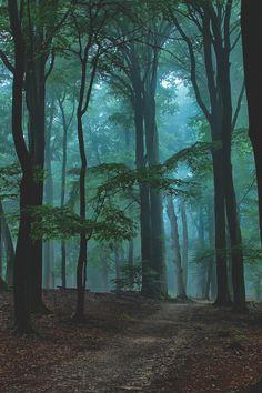 Visualechoess: Blue mist - by: Ruud van Putten