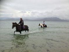 Connemara Equestrian Escapes - Horse Riding Holidays In Ireland Riding Holiday, Ireland Holiday, Connemara, Horse Riding, Horseback Riding, Equestrian, Swimming, Horses, Cold